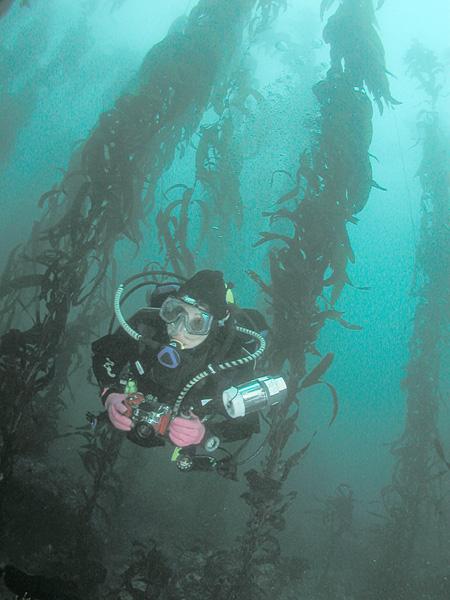 Iodine Radiation Seaweed Kelp