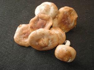 radioproctective mushrooms shiitake